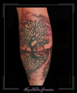 boom,wortels,heide,omgeving,pad,zon,kuit