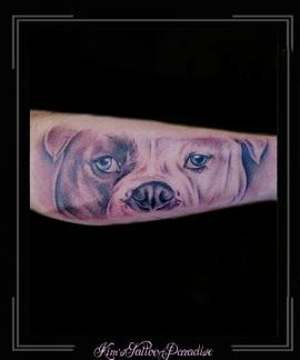 portret bulldog hond onderarm