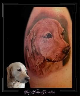 portrethondgolden-retrieverbovenarm