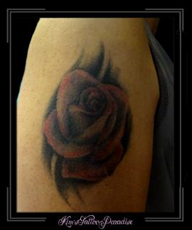 roos kleur en schaduw
