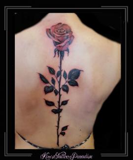 roos,rozen,bloemen,rug,tak,