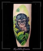 aap chimpansee kuit