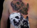 portret hondjes