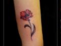 klaproos,bloemen,bovenarm,kleur,