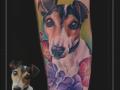 portret jack russel terrier onderarm 1