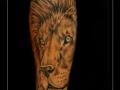 leeuw onderarm