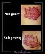lotus, voor en na de genezing, zij, kleur