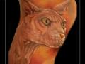 naaktkat-sfinx-onderbeen