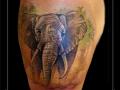 olifant-dier-bovenarm-kleur