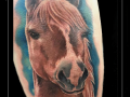 paard-portret-dier-bovenbeen