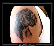 portret boxer