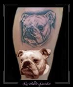 portret bulldog hond bovenbeen