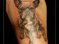 portret hond bulletje bovenbeen