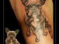 portret hond bulletje bovenbeen2