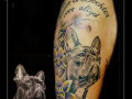 portret hond franse bulldog