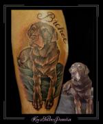 portret hond labrador namen kuit2