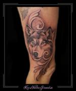 portret huskey wolf hond