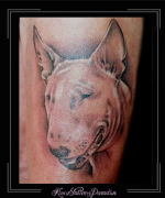 portret,bull terrier,arm