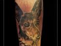 portret,hond,podenco,utah,onderarm,