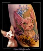 portret,sfinx,kat,poes,naaktkat,kleur,color,bovenarm,sphinx,nude cat,dier,portret,