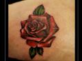 roos rozen bovenbeen