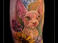sfinx,kat,poes,naaktkat,kleur,color,bovenarm,sphinx,nude cat,dier,portret,