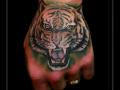 tijger op hand