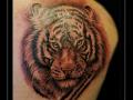 tijger-schouder-roofdier