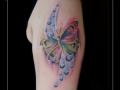 vlinder watercolor